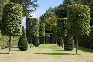 Trim Trees in Longwood