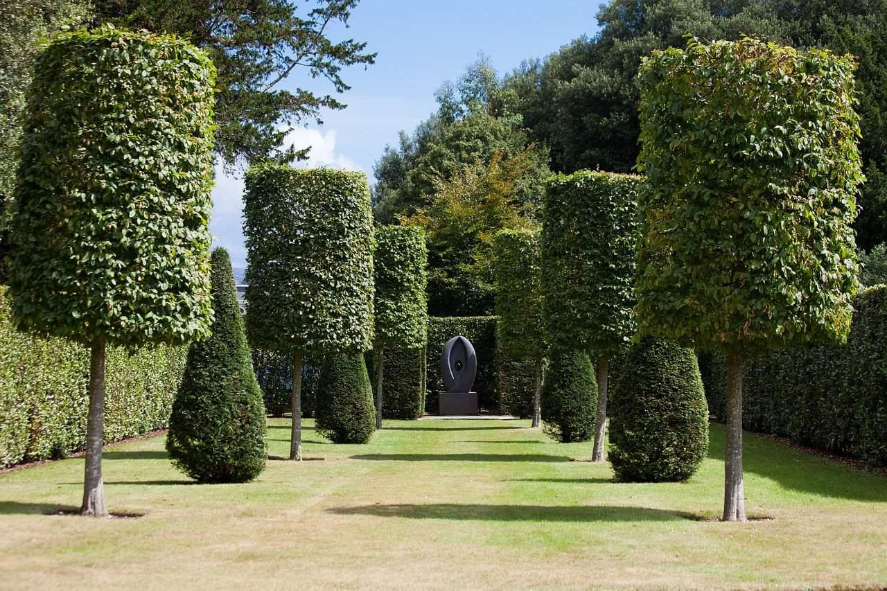 How Often Should You Trim Trees in Longwood
