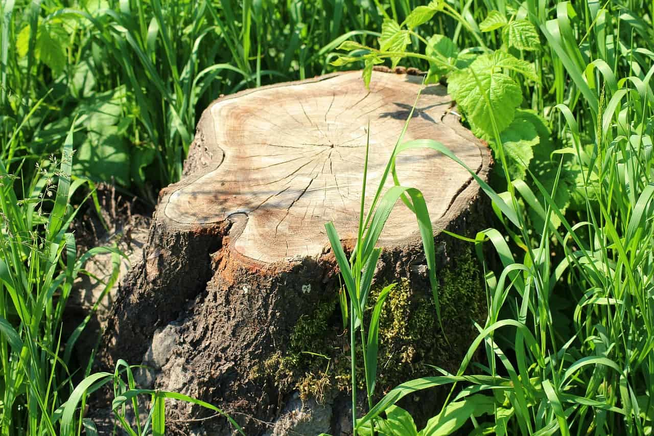 Questions to Ask a Tree Removal Service in Longwood