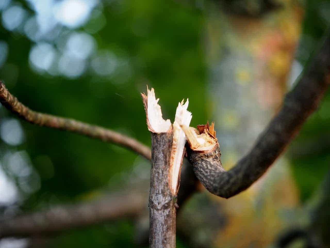 Trimming Trees before Hurricane Season
