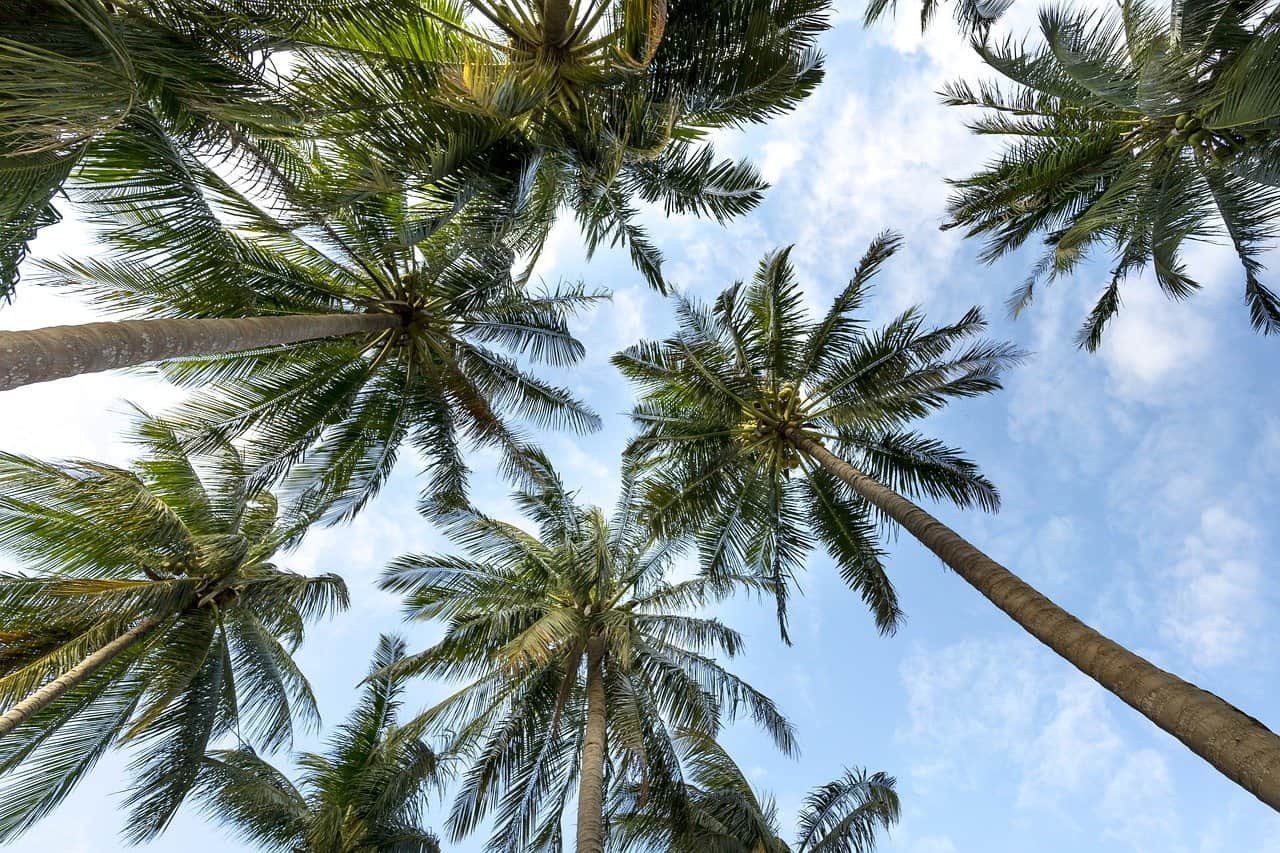 Why You Should Consider Palm Tree Trimming in Longwood