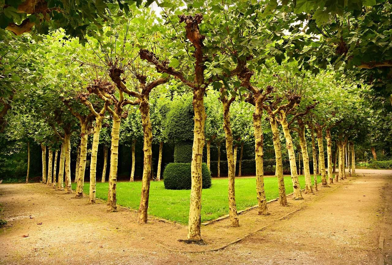 Three Benefits of Tree Trimming