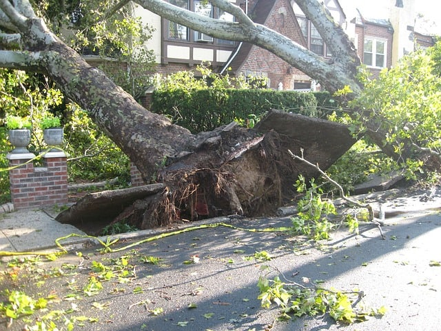 Benefits of Storm Damage Tree Removal in Longwood