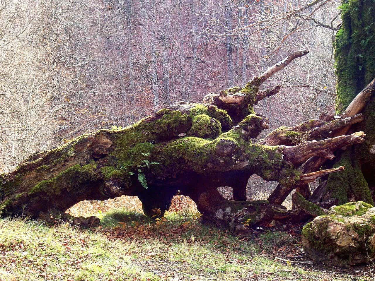 Hurricane Tree Removal in Longwood